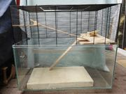 Mäuse ratten hamster chinchilla degu