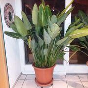 Topfpflanze für innen und außen -