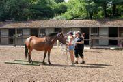 Pferde-Außenbox GemeinschaftsPaddock in Worms-Weinsheim frei