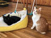 2 liebe Katzenkinder Katerchen 7
