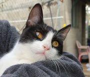 Katze Luna sucht ihr Zuhause