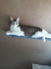 Putziges Katzenmädchen Aljani sucht ihr