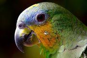 Neues Zuhause für Ihren Vogel
