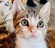 Fritzi tolles Katzenmädchen ca 3