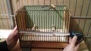 5 Ausstellungskäfige und eine Vogelfotobox
