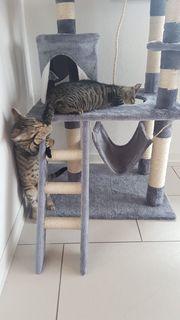 Zauberhafte Katzenkinder suchen ihr Zuhause