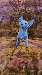 Don Sphynx Kitten Reinrassige mit