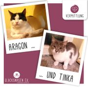 Kätzchen Aragon und Tinka sitzen