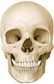 Humanschädel 3-tlg 400 jährig