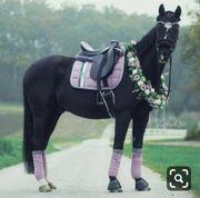 Pferdebesitzer aufgepasst Pflegebeteiligung gesucht RsP