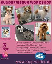 Hundefriseur Workshop - Theorie und Praxis
