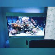 Meerwasseraquarium Eheim Incpiria 300 Marine
