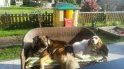 Liebevolle Hundebetreuung mit Familienanschluss