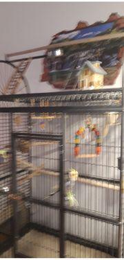 Zwei Nymphensittiche mit großem Käfig