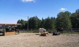 2 Offenstallplätze frei: Kleinanzeigen aus Sulzberg - Rubrik Pferdeboxen, Stellplätze