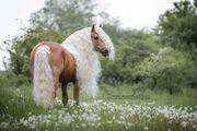Pferdeshooting Pferdefotograf Turniere TFP Shooting
