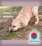 Talina - zeigt uns hier wie