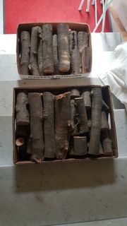 Buchenholz Brennholz Holz