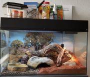 Lucky Reptile Glasterrarium Starter Kit