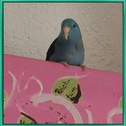 Sperlings Papagei