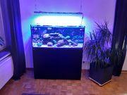Meerwasseraquarium Red Sea reefer 350