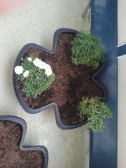 ich verkaufe bepflanzte töpfe