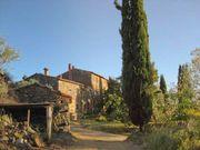 Toskana Ferienhaus mit Oliven in