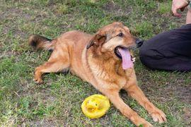 Zvrko - Der Zungenbrecher mit der: Kleinanzeigen aus Kirchzell - Rubrik Hunde