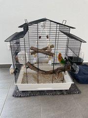2 Agapornieden unzertrennliche Zwergpapageie Liebesvögel