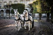 Suche Kutschfahrt für Hochzeit Feldkirch