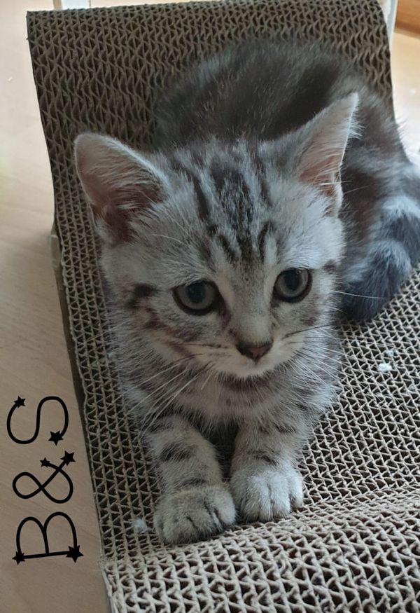 Gratis basel katzen baby Katzen suchen
