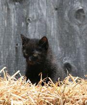 Bauernhofkatze Katzenbabys Katzen Babykatzen Katzenkinder