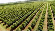 Macadamianüsse Mandelnüsse sowie Watte und