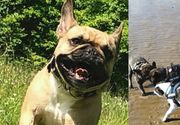 Fotos von Hund und Mensch