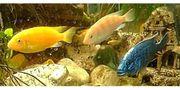 sehr schöne blaue gelbe und