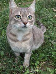 süße Katze Mau