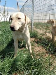 Robika sucht hundeerfahrene Menschen