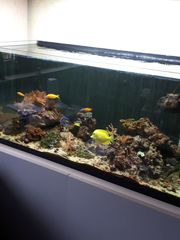 Meerwasseraquarium 300 Liter komplett mit