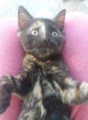Clarice Katze aus dem Tierschutz