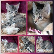 Kitten Baby Katze Loona geimpft