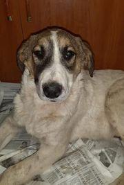 Schmusehund Daria