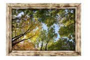 Holzbilderrahmen geflämmt mit Fotografie Herbstbäume