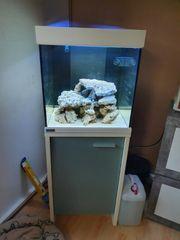 Meerwasser Aquarium mit Technik