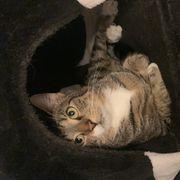 Winnie Sucht Dringend Neues Zuhause