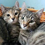 Geschwisterpärchen Emmi und Feivel suchen