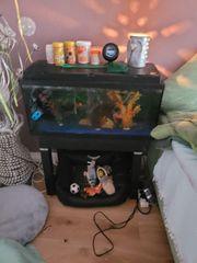 Aquarium günstig abzugeben oder Tausch