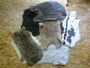 Hasenfelle Kaninchenfelle