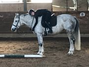 Reitbeteilligung gesucht Reiter sucht Pferd