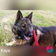 Kaya - Mit dem Zweiten sieht