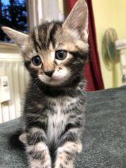 Babykatzen suchen neues Zuhause